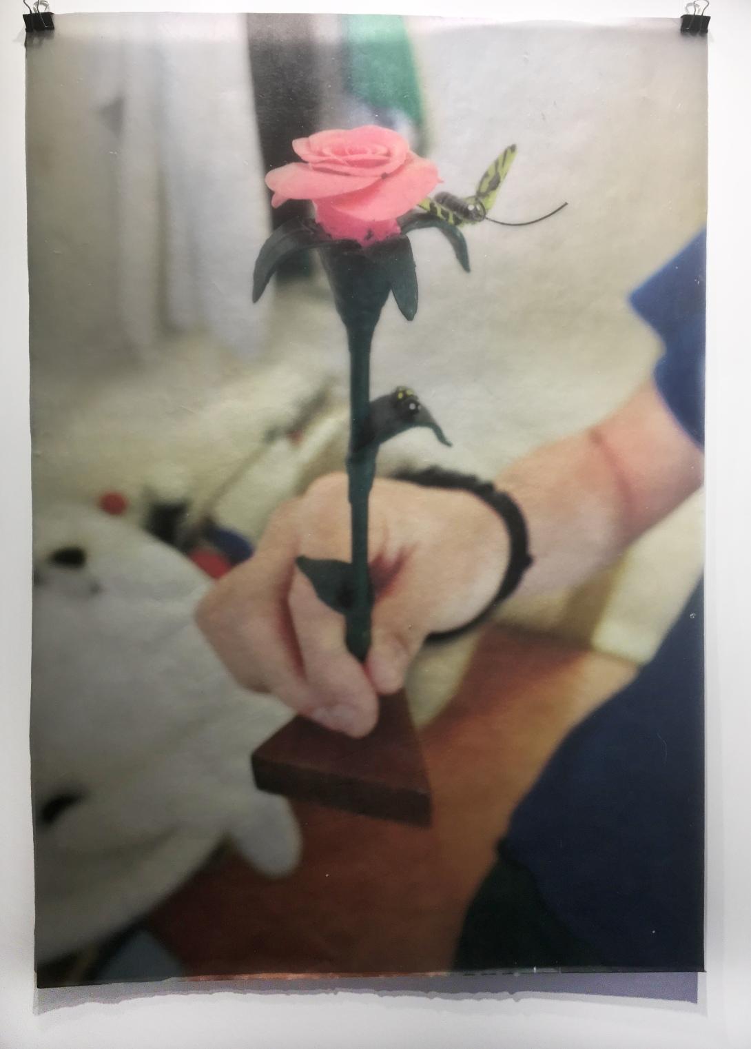 wax_flower